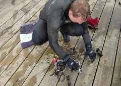 iPhone 11 sobrevive 6 meses debaixo de água. Conhece a história