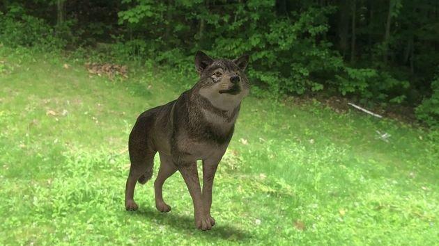 wolf ccore 3