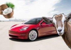 Carros Tesla terão mais sons adicionados em breve (o som cabras e coco são dois deles)