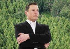 Elon Musk, CEO da Tesla, faz doação de quase 1 milhão de Euros para plantar árvores