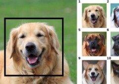 """Esta inteligência artificial da Nvidia faz """"face swap"""" com animais!"""