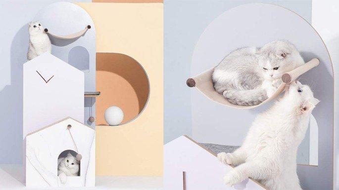 xiaomi gatos