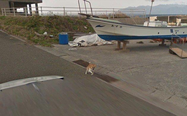 Google Maps cão