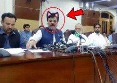 Hilariante! Político com filtro de gato na cara durante transmissão ao vivo