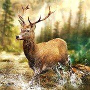 https://play.google.com/store/apps/details?id=com.tensquaregames.hunting.clash.wild.hunter.deer