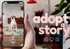 Instagram: este filtro português foi criado para promover a adoção animal
