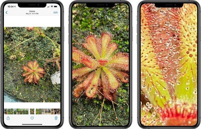 Zoom iOS