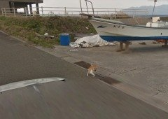 Este cão é a nova estrela do Street View no Google Maps