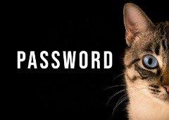 Passwords: uma em cada seis pessoas usa o nome do seu animal de estimação
