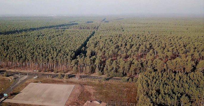 Serão destruídos 92 hectares de árvores para a construção da Gigafactory da Tesla