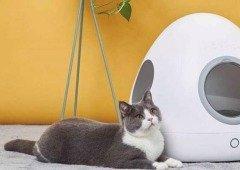 Xiaomi vai lançar casota inteligente para aquecer ou refrescar os teus animais de estimação