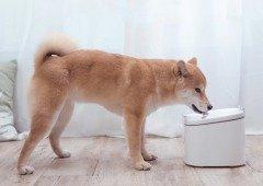 Xioami lança um dispensador de água para gatos e cães que tens de conhecer!